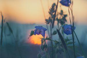 meadow-811339_960_720